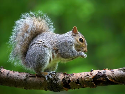 Squirrels 101: Facts, Photos & Information on Squirrels