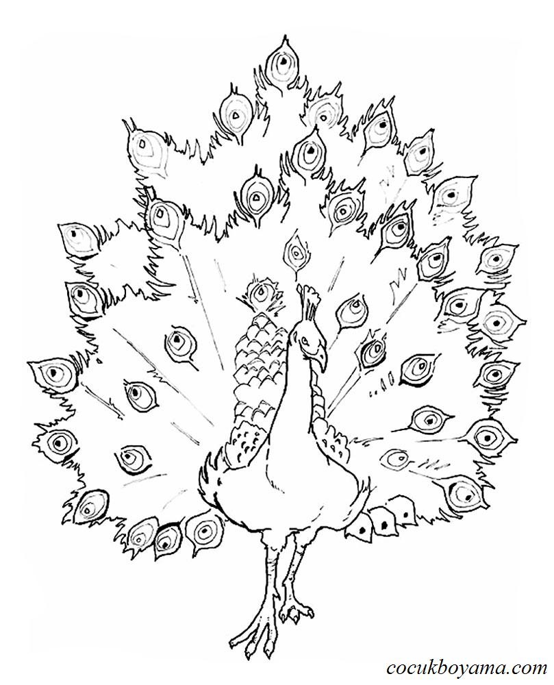 Tavus Kuşu 22 ücretsiz Boyama Resimleri