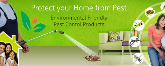 Mourier Pest Control in Gurgaon Has Uplifted The Hygiene and Atmosphere of Gurgaon's Residences