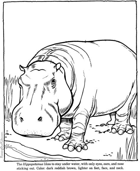 hippopotamus hippo coloring picture sheets