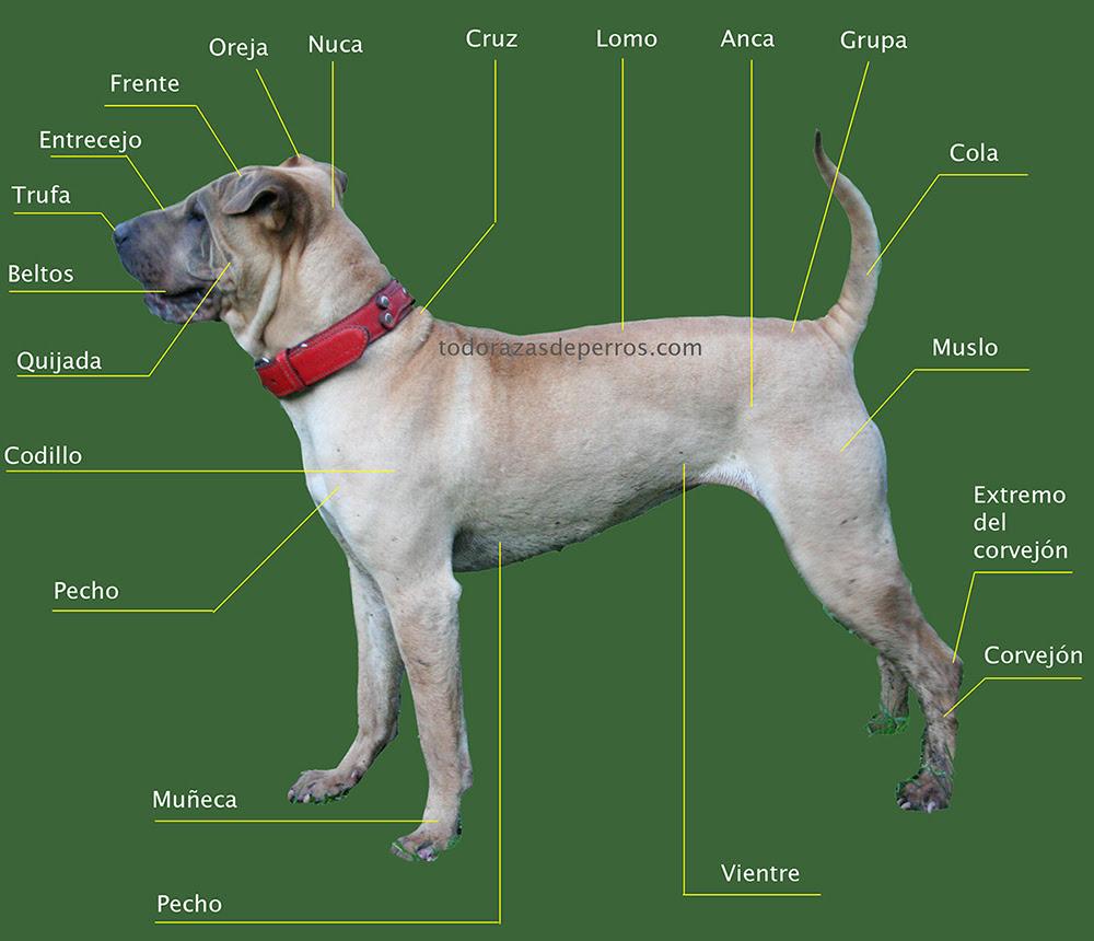 Descripcion De Un Perro En Ingles Y Español - Noticias del ...