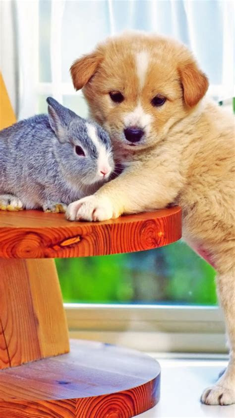 puppy hugs bunny wallpaper  iphone wallpapers