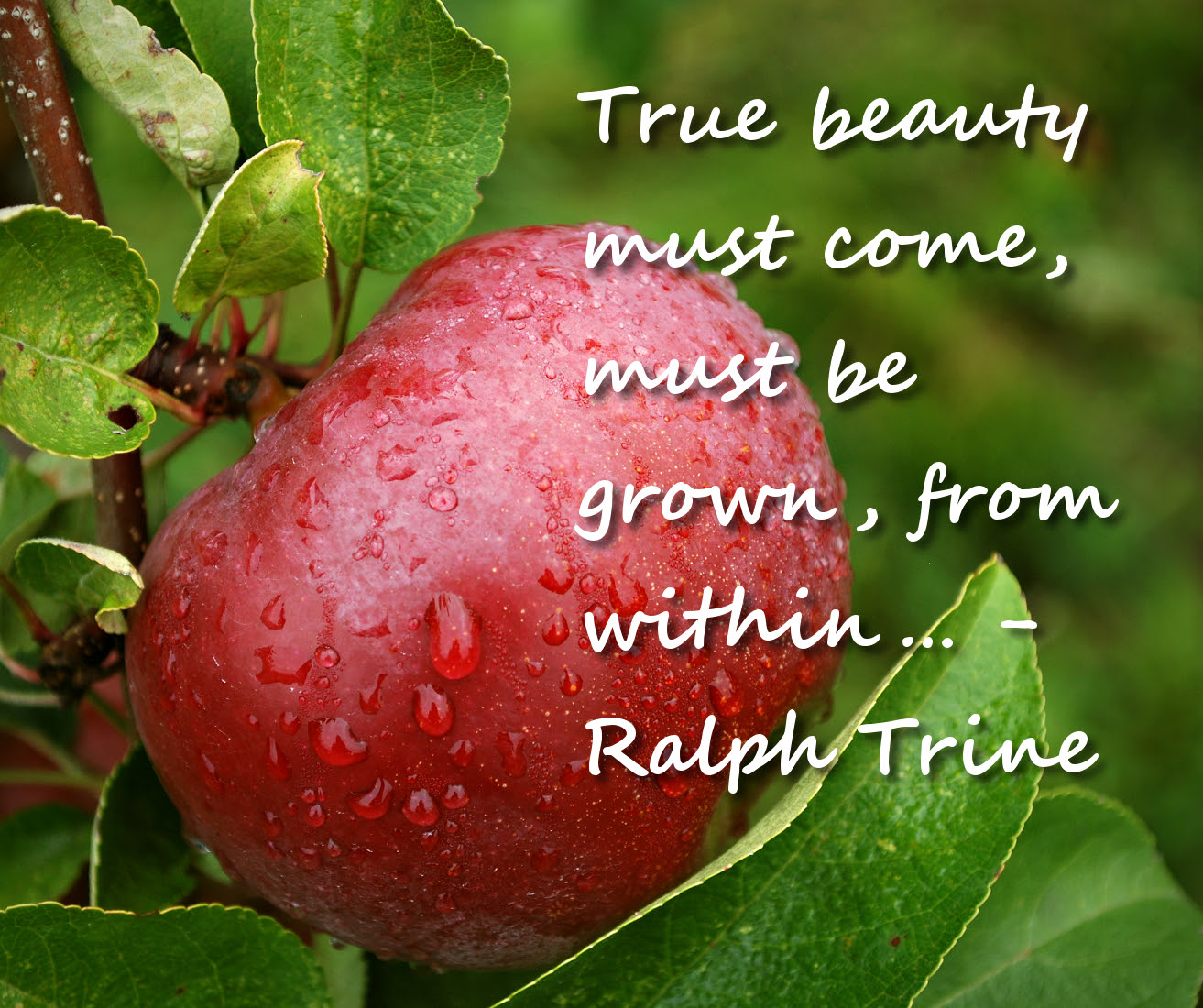 When Beauty Comes From Within Quotes Poems Prayers And Words Of