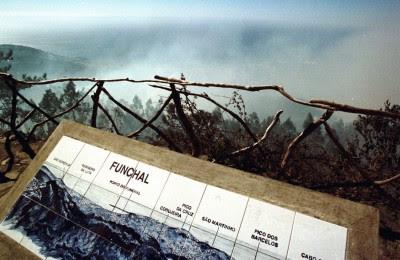 Madeira: Bloco vai propor Plano de Ordenamento Florestal