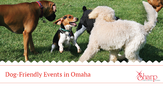 Dog-Friendly Events & Businesses in Omaha, NE