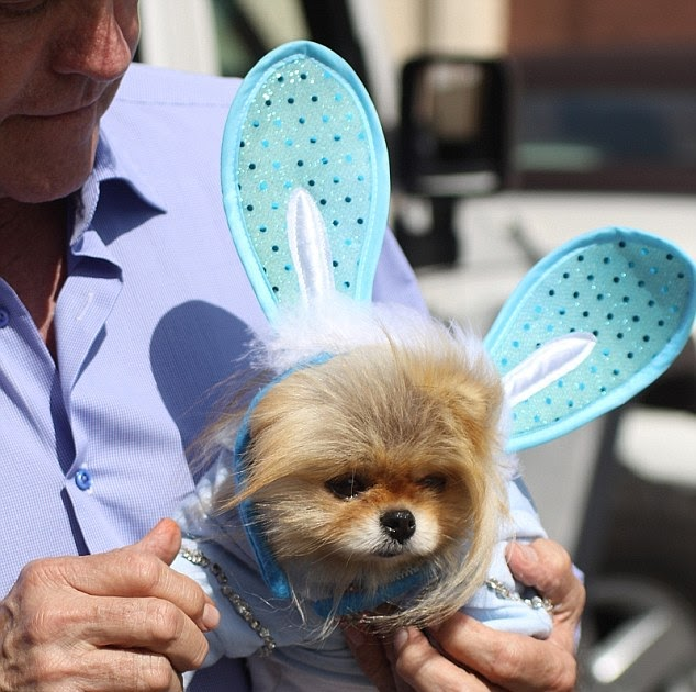 Easter Giggy Lisa Vanderpump S Costumed Pomeranian
