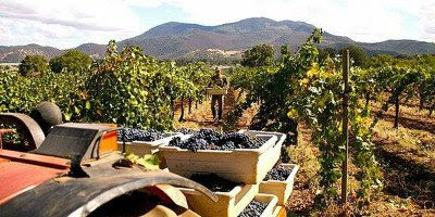 First Annual New Mission Winemakers Tasting in SF on November 7th - Wine Industry Advisor