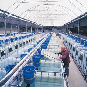 Fish Farm Tank