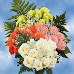 168 Roses Your Choice of Color & Fillers Wholesale by GlobalRose