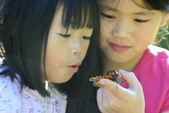 August 23rd - Third Monarch Butterfly Release