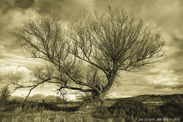 AMNISTÍA FISCAL para los árboles y para la utopía.