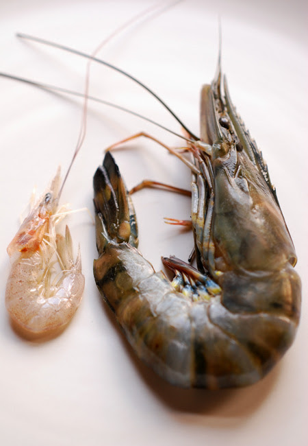 school and tiger prawns