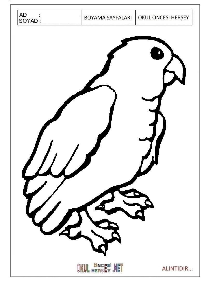 Papağan Boyama Sayfaları