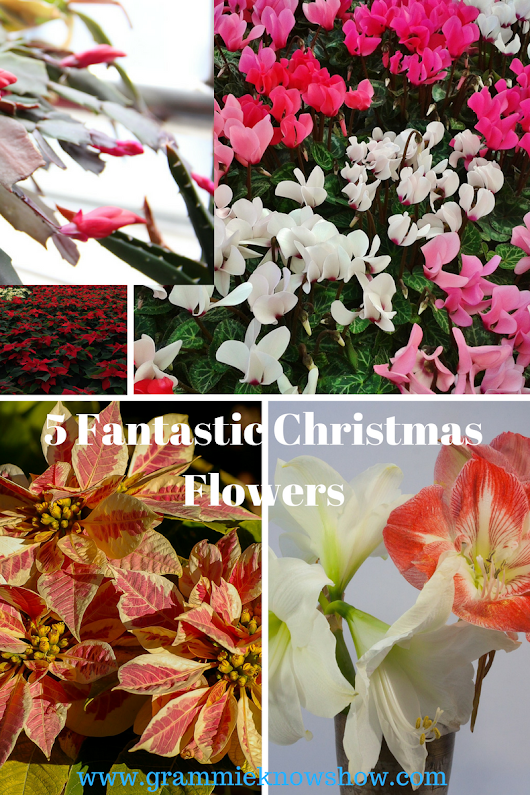 5 of the Best Christmas Plants for your Hostess Gifts