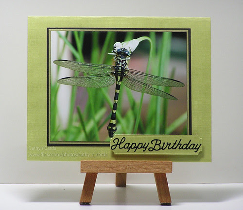 Dragonfly...close up! by cathroff