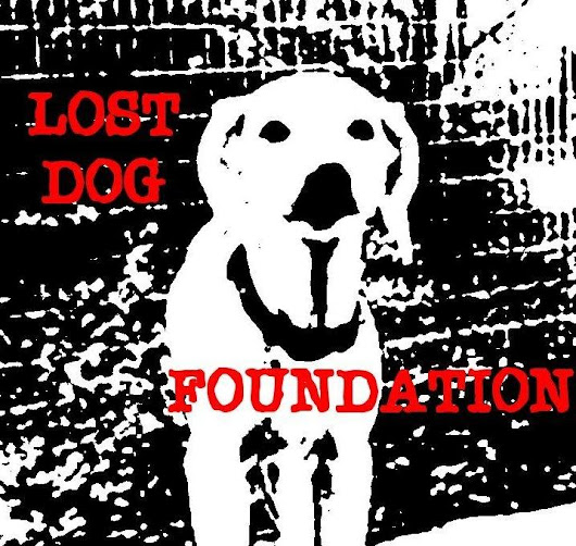 Christine162's Story About Lost Dog Foundation