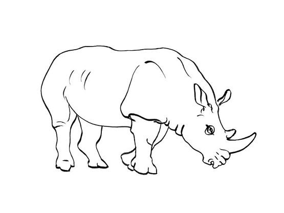Coloriage Rhinocéros 5 Coloriage Rhinoceros Coloriages Animaux