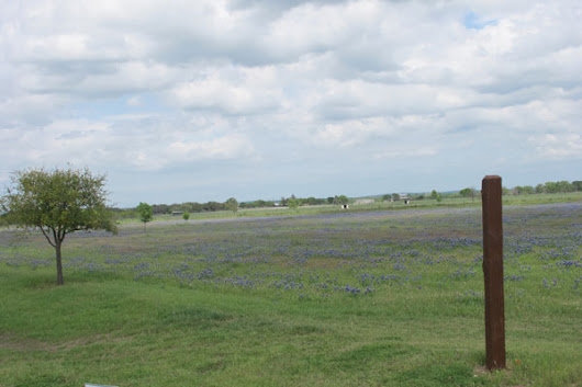 Bluebonnet Fields – Texas Hill Country - Traveling Gishi