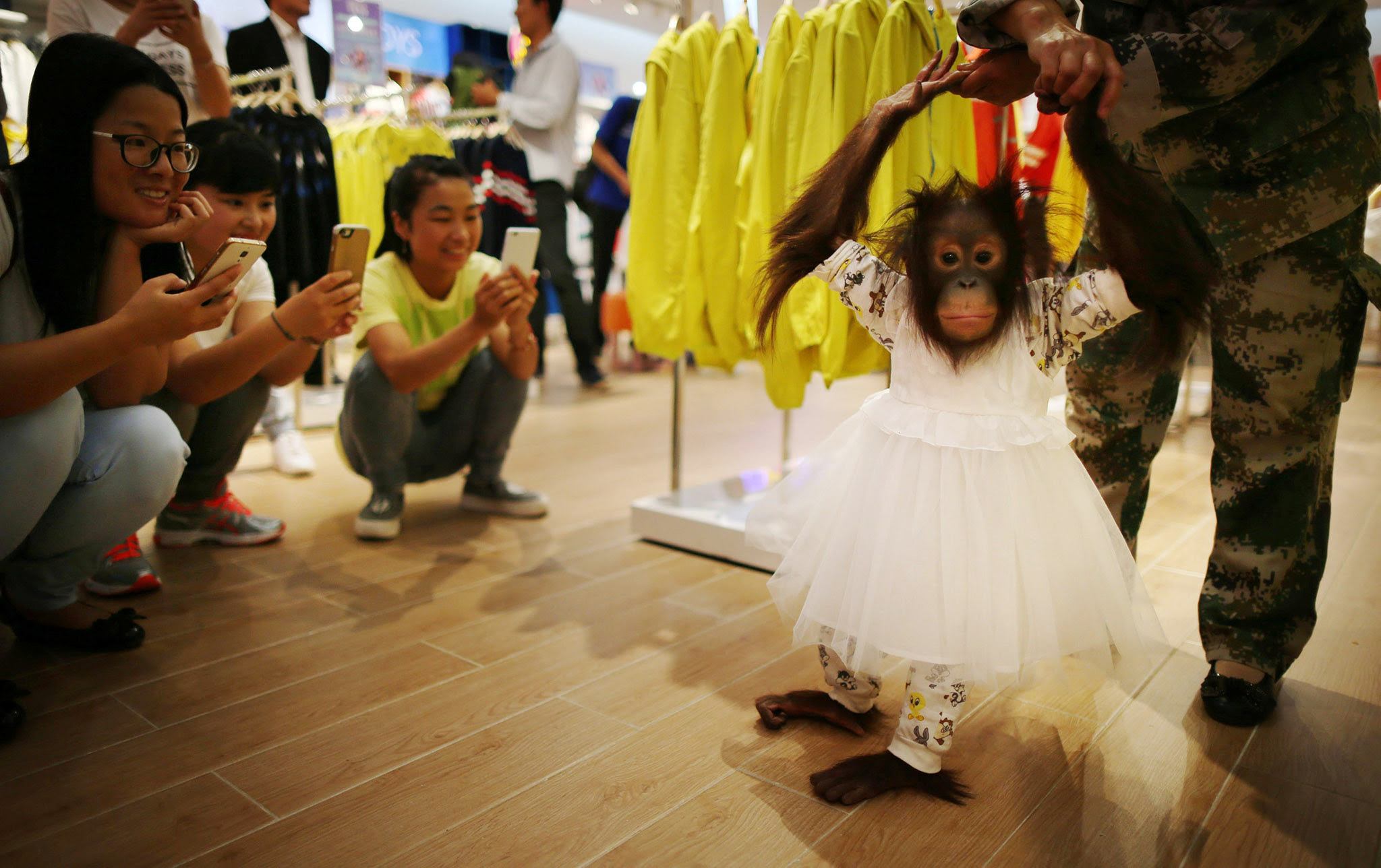 An orangutan tries a dress at a shopping mall in Kunming, Yunnan province, China  August 24, 2016. China Daily/via REUTERS     ATTENTION EDITORS - THIS IMAGE WAS PROVIDED BY A THIRD PARTY. EDITORIAL USE ONLY. CHINA OUT. NO COMMERCIAL OR EDITORIAL SALES IN CHINA.