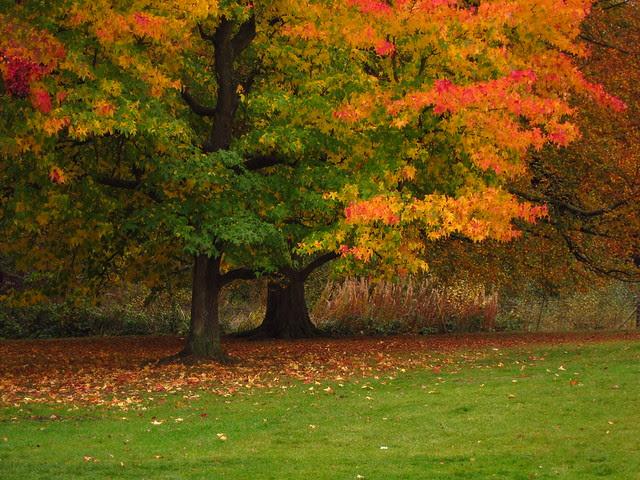 Autumn Colours at Kenwood