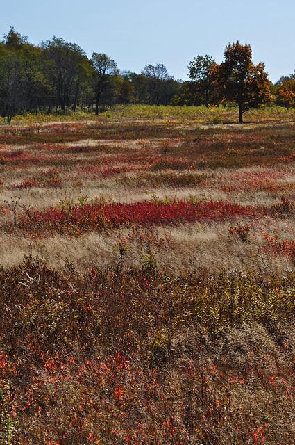 Big Meadows (7)