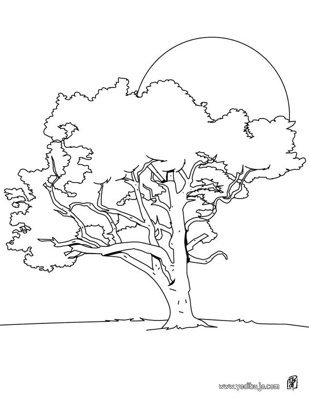 Dibujos Para Colorear La Naturaleza Eshellokidscom