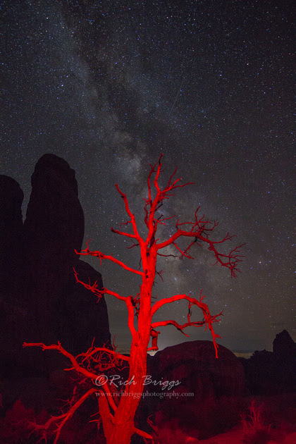 Images of the Night Sky and the Milky Way | Red Dead Juniper and the Milky Way