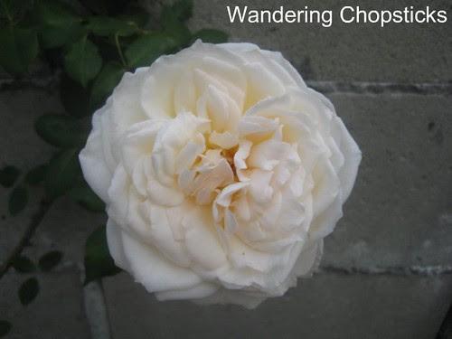 4.14 Snowbird Rose 2