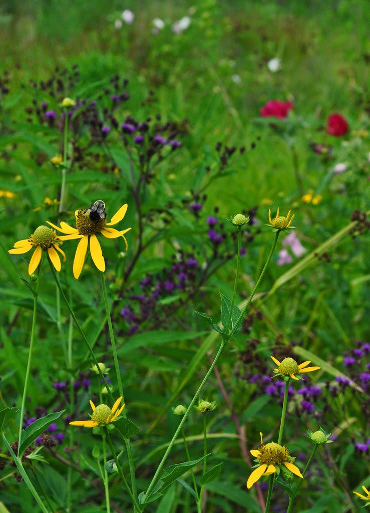 July Meadow (4)