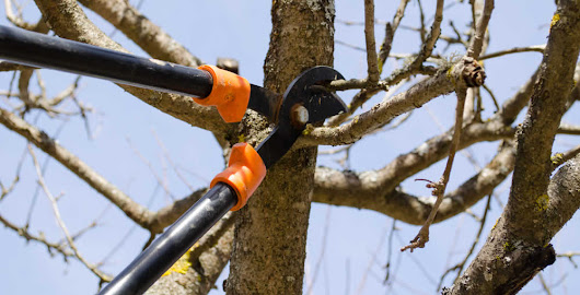 Tree Trimming & Tree Pruning Advice from a Milwaukee Arborist
