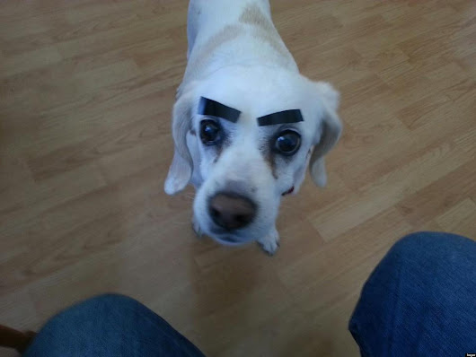 31 Dogs With Eyebrows