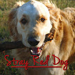 Stray Red Dog: A Dog Memoir by Ian Duncan – Part I