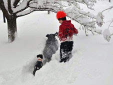 Michael (human), Eddie (terrier mix), and Duncan (Bernese Mountain  dog) from Silver Spring, MD frolic in the deep snow after the Blizzard  of 2010