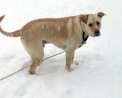 Zeus_snow11809b