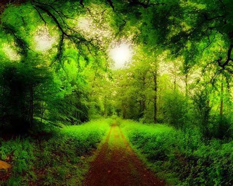 natural forest road trees green forest grass green hd