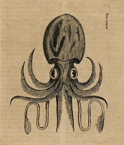 Squid - cabinet of curiosities