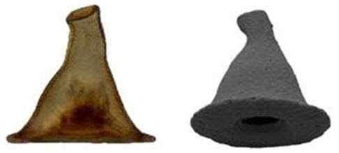 Amoeba's Carapace Resembles Gandalf's Wizard Hat