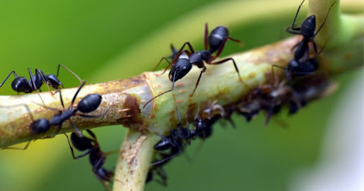 How to Protect Your Trees From Carpenter Ants | Woodsman Tree Service
