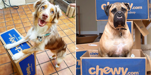 Has Chewy.com proven that online sales are going to the dogs? – RetailWire