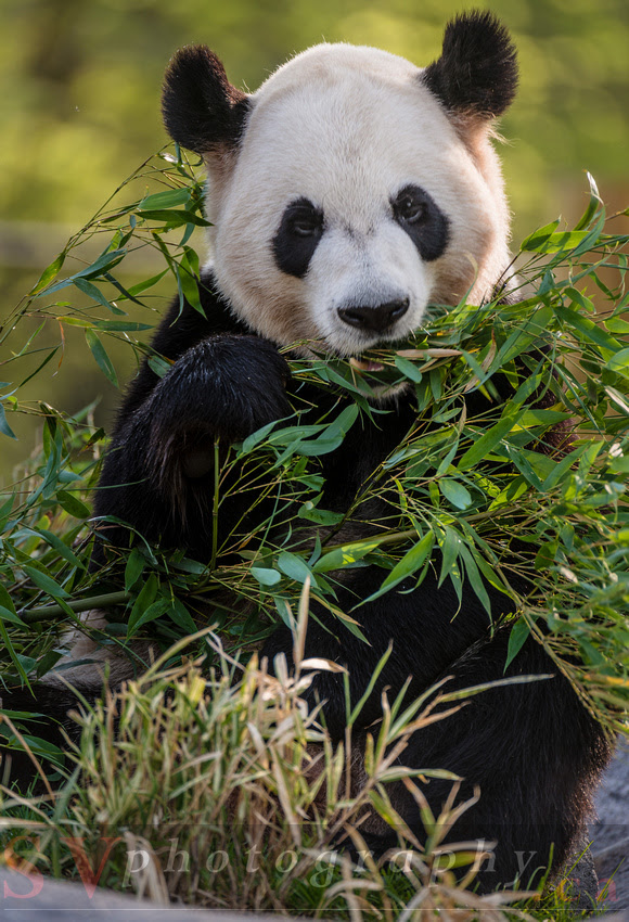 SVPhotography.ca: Toronto Zoo &emdash;