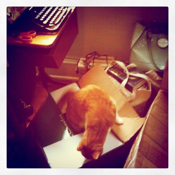 Helping pack or unpack, wherever there are boxes, Auggie won't be far away.