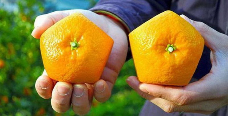 Апельсин еда, прикол