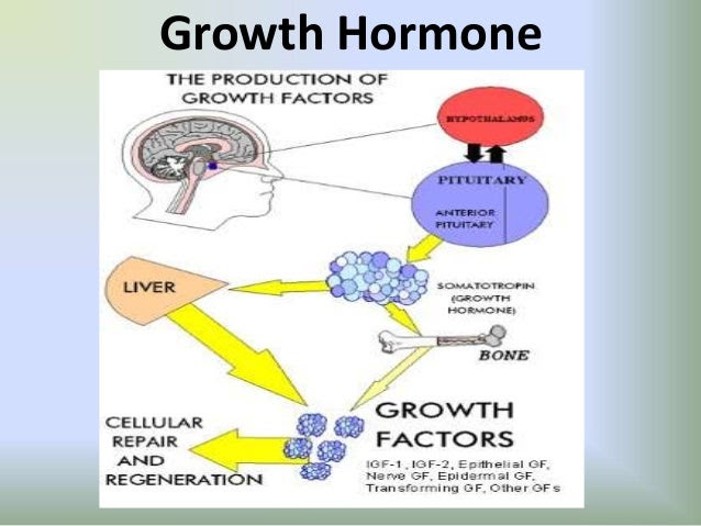 growth hormone คือ
