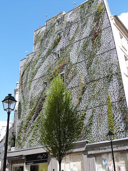 mur végétal 2.jpg