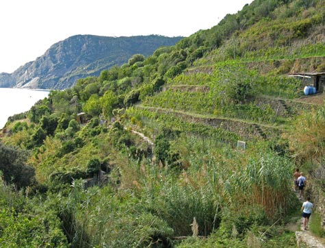 Cinque Terre Seaside Trail - A Hiker's Guide to Paradise