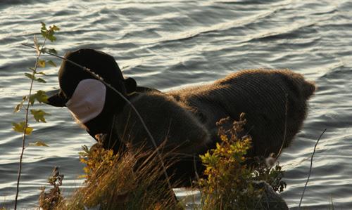 goose..