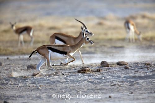 Run!!! by Megan Lorenz