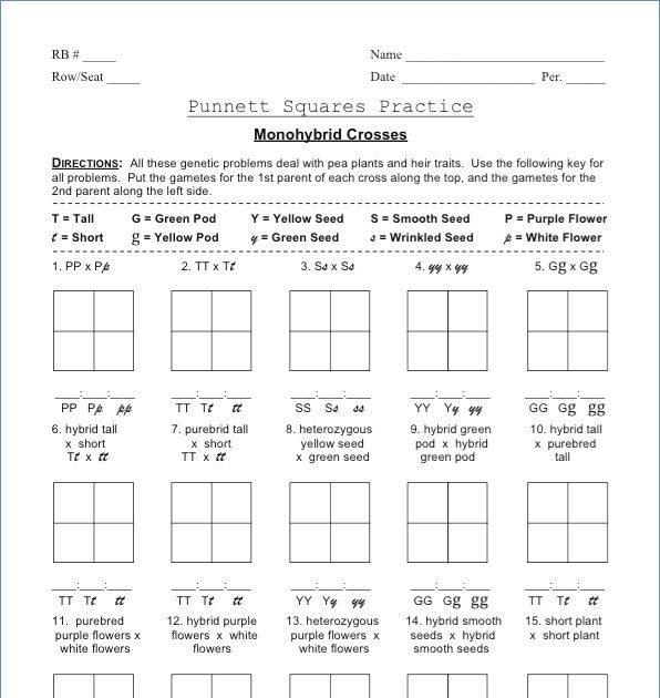 Monohybrid Cross Problems Worksheet With Answers - worksheet