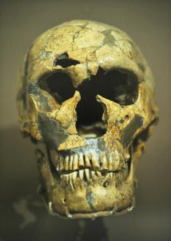 El cráneo del Homo neanderthalensis conocida como La Ferrassie 1 del refugio La Ferrassie Rock, Francia.
