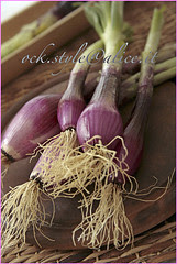 Veg - Young Red Onion on Wood